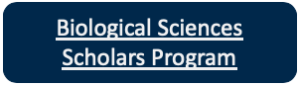 Biological Sciences Scholars Program button